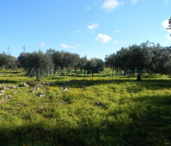 Agricultural land with olive trees